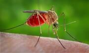 چالش مالاریا در برخی مناطق ایران وجود دارد