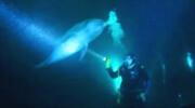 فیلم | دلفینی که از غواص کمک میخواهد