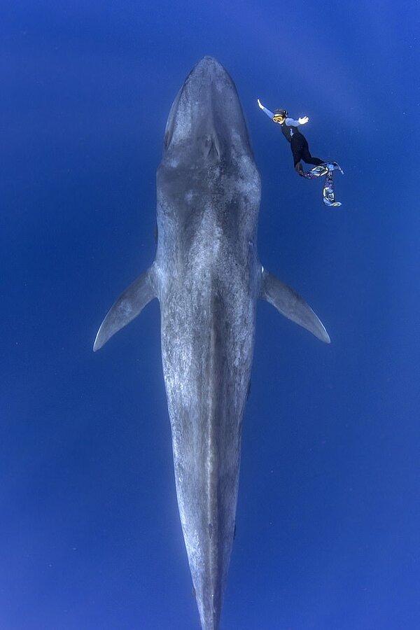 e blue whale