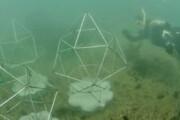 صخرههای مرجانی مصنوعی مأمنی برای حیات دریایی