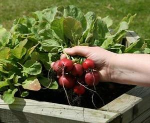 سبزيجاتي كه مصرف آنها ميتواند فشار خون بالا را كنترل كند