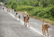 کنترل نشدن زادآوری سگها تهدیدی برای حیات وحش است