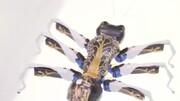 مورچههای رباتیک هم آمدند