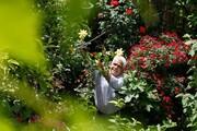 ۱۴۰ گونه گیاهی در یک گله جا