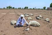 بحران آب به هند رسید | روستاها خالی و دامها تلف میشوند