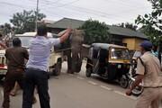 عکس روز: فیل در خیابان