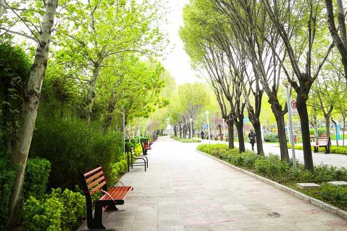 افزایش سرانه فضای سبز منطقه 8