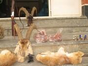 گرفتاری شکارچی غیرمجاز در دام پلیس کیار