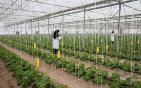 اجرای ۳۳ طرح کشاورزی در قم