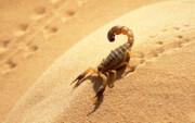 شیوع عقربگزیدگی در روستاهای نیکشهر