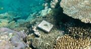 ترمیم نیمی از مرجانهای سفیدشده خلیج چابهار