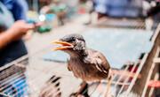 ضبط ۱۰۰ گونه جانواری از قاچاقچیان