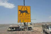 تابلوهای هشداردهنده مسیر تردد یوز آسیایی در استان سمنان نصب شد