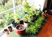 ۵ اپلیکیشن کاربردی برای پرورش گل و گیاه