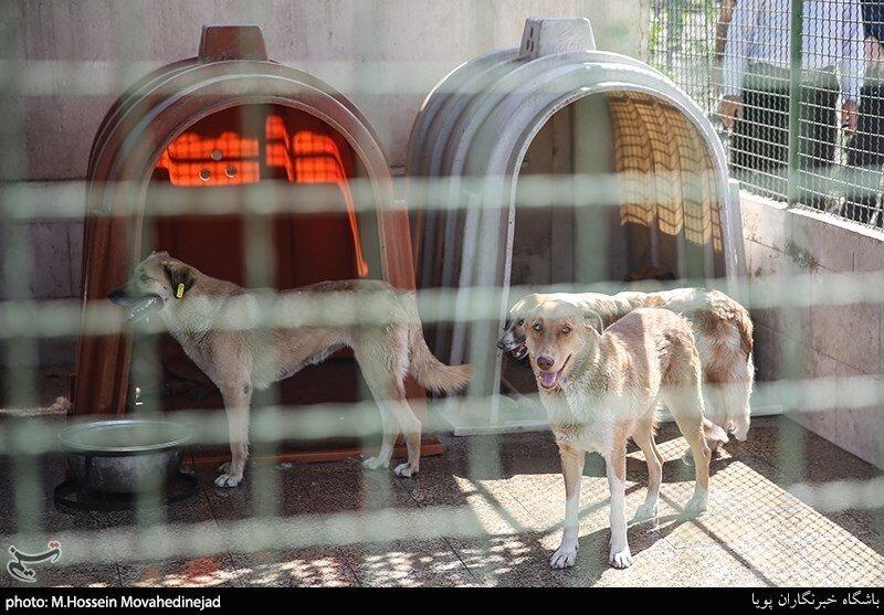 نقاهتگاه سگها در آرادکوه