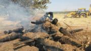 گرما جنگلهای آذربایجانغربی را تهدید میکند