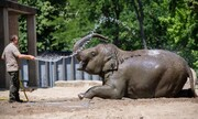 عکس روز: خنک کردن فیل