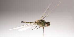 حشرهها حامل باکتریهای زیانبار در بیمارستانها هستند