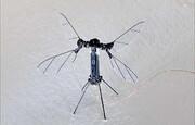 حشره رباتیکی که با نور پرواز می کند | سرعت ۱۷۰ بار در ثانیه