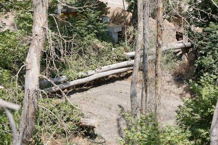 درختان پلاک 50
