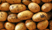 علت افزایش قیمت سیبزمینی