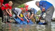بزرگراههای پلاستیکی به مقصد اقیانوسها