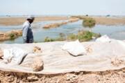جزئیات پرداخت خسارت سیل به کشاورزان خوزستانی