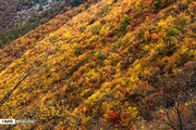 تقدیر حناچی از دستاندرکاران ثبت جنگلهای هیرکانی در فهرست میراث جهانی یونسکو