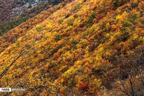ثبت جهانی جنگل های هیرکانی