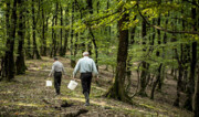 پایان قتلعام جنگلها
