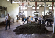 کارخانهداران به حمایت چایکاران آمدند