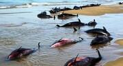 «خور موسی» آلودهترین منطقه جهان به جیوه است