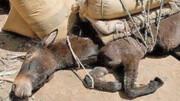 یونان متهم به حیوانآزاری برای مقاصد گردشگری