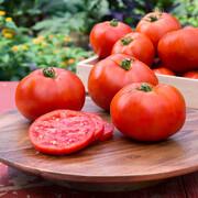 گوجهفرنگی ممکن است خطر سرطان پروستات را کاهش دهد