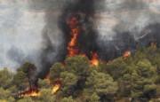 افزایش ۳۰ درصدی آتشسوزی جنگلها