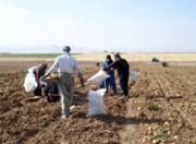 سیر تا پیاز کشاورزی دهگلان