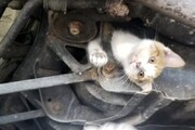 عکس روز: گربه درون شاسی ماشین