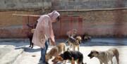 ساماندهی سگهای بلاصاحب دماوند با مشارکت فعالان حقوق حیوانات