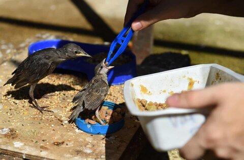 عکس روز: غذا دادن به جوجهها
