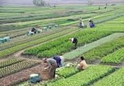توسعه روستایی با مشارکت تعاونیها