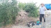 ملایر؛ شهر باغهای آلبالو