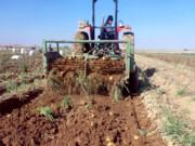 جای خالی بخش خصوصی در کشاورزی کردستان
