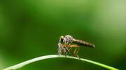 آزمایش موفق در چین |  نابودی کامل پشههای مرگبار در دو جزیره