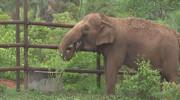 تشدید بحرانهای اقلیمی با انقراض فیلهای جنگلی آفریقایی