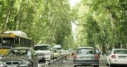 درختان عامل تشدید آلودگی هوا در محیطهای شهری