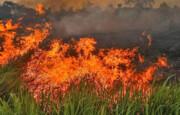 آتش به جان جنگلهای مرکزی پرتغال افتاد