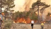 ۳۰ نفر در آتشسوزیهای جنگلی پرتغال مصدوم شدند