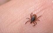 صاحبان این گروه خونی در مسافرتها مراقب حشره گزیدگی باشند