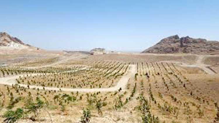 توسعه فضای سبز در دل شهر کویری قم