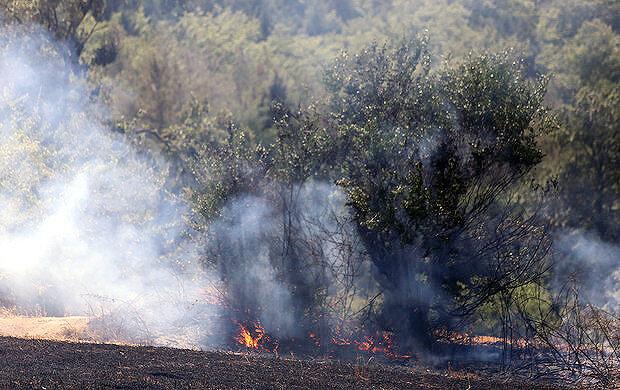 جنگل آتش